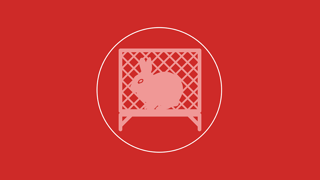 rabbit cages graphics